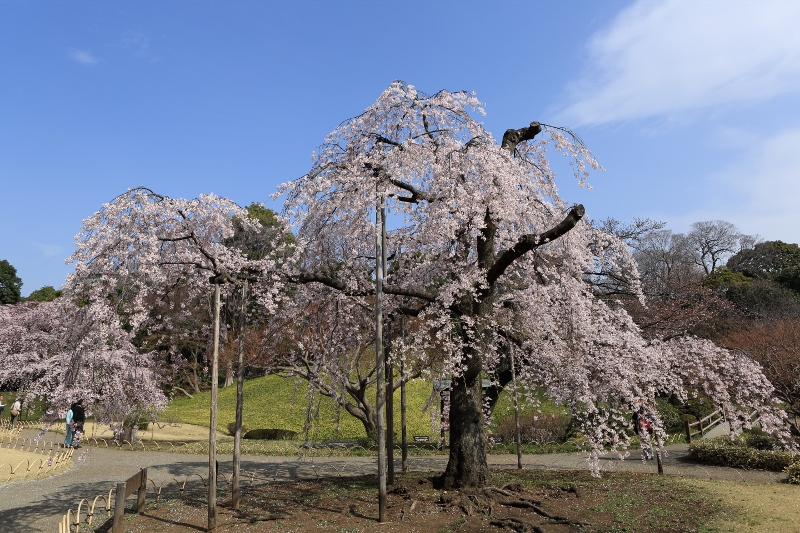 koishikawa-s_0009f.jpg