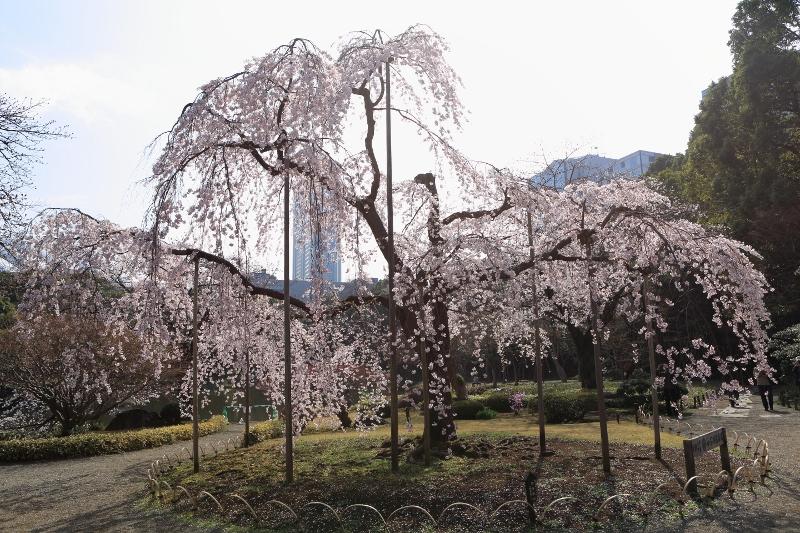 koishikawa-s_0014f.jpg