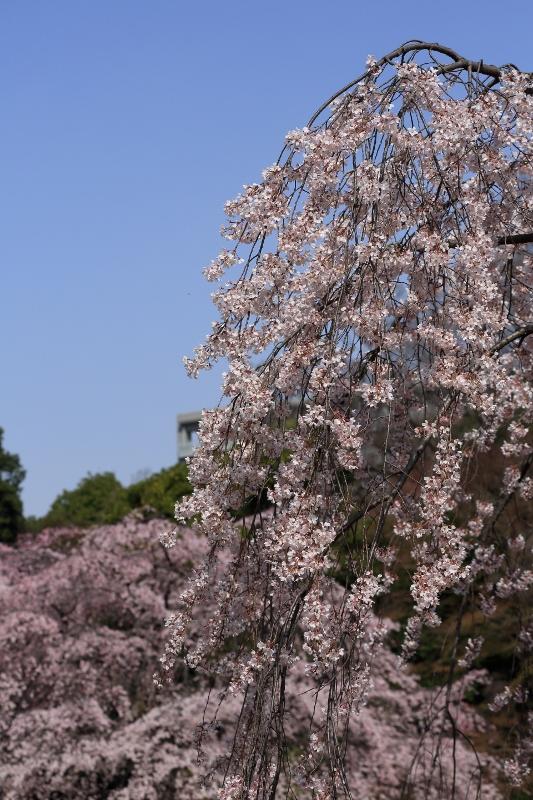 koishikawa-s_0022f.jpg