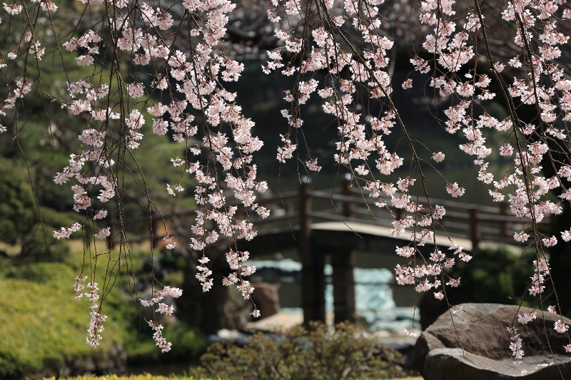 koishikawa-s_0023f.jpg