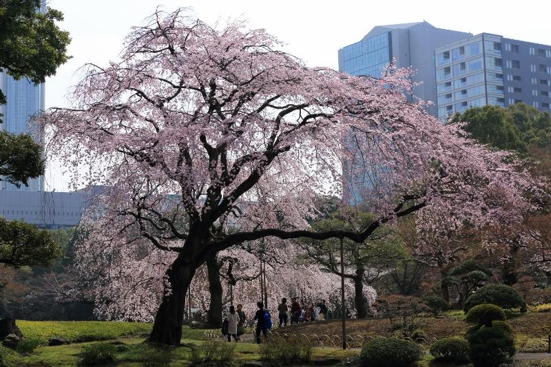 koishikawa-s_0028f.jpg