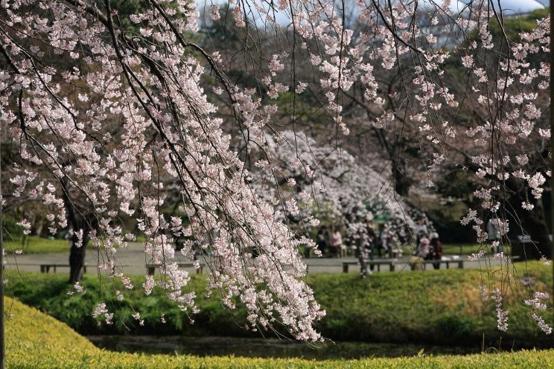 koishikawa-s_0029f.jpg
