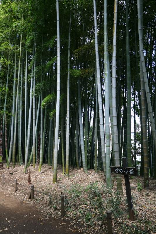kokubunji_0010f.jpg