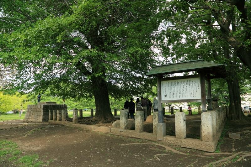 kokubunji_0053f.jpg