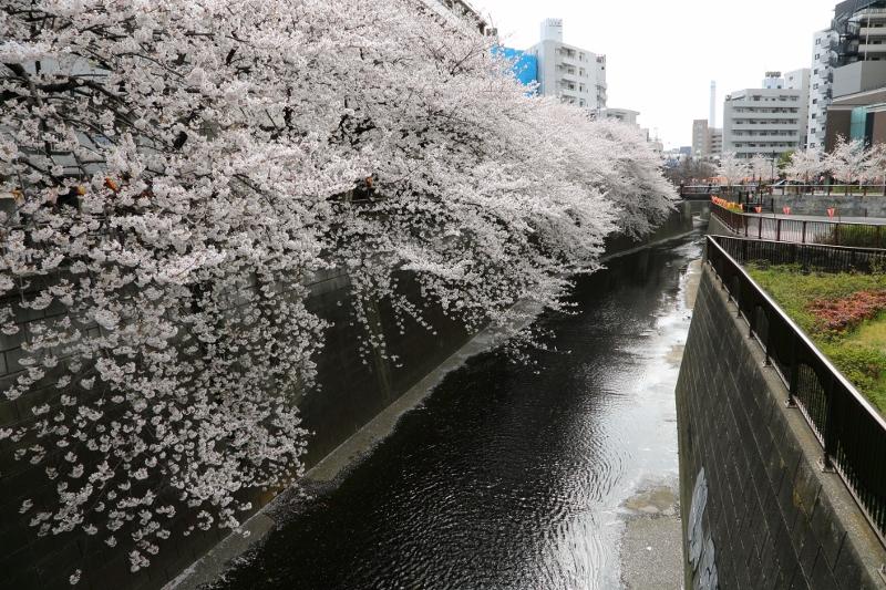 megurogawa_0001f.jpg