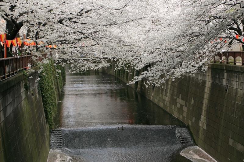 megurogawa_0002f.jpg