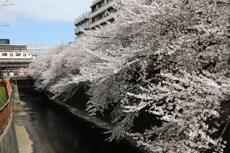 megurogawa_0004f.jpg