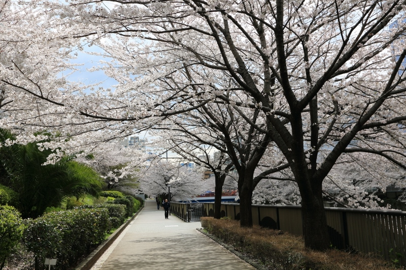 megurogawa_0007f.jpg