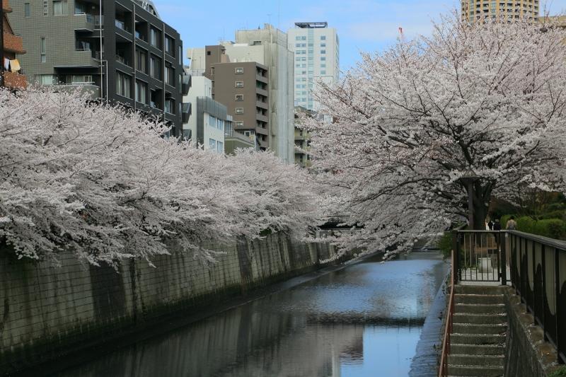 megurogawa_0008f.jpg