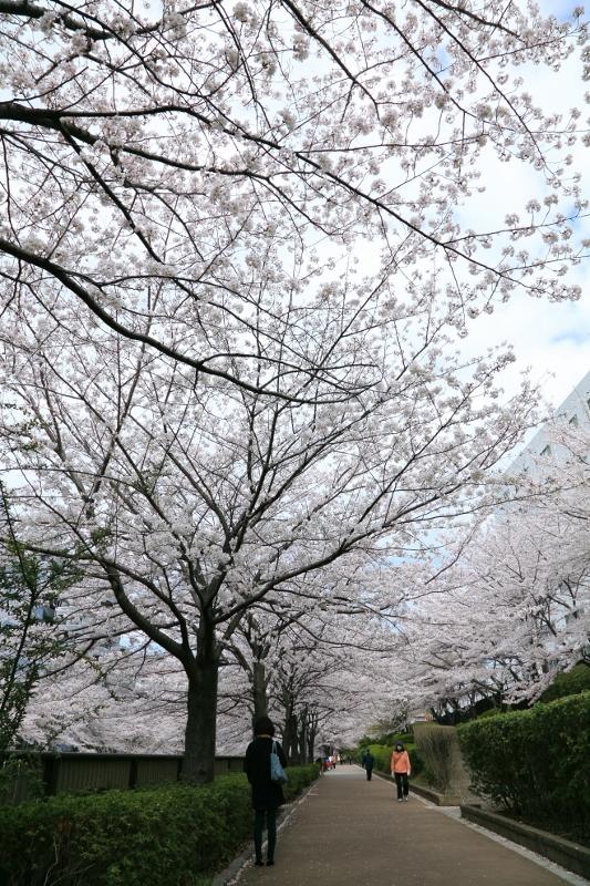 megurogawa_0009f.jpg