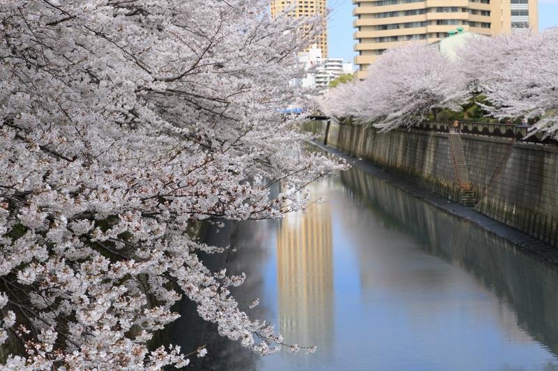 megurogawa_0020f.jpg