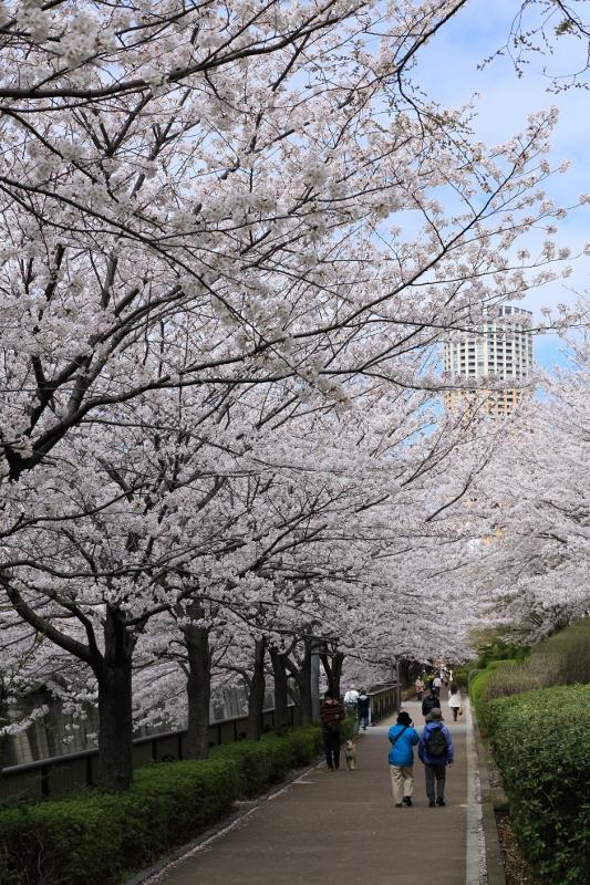 megurogawa_0022f.jpg