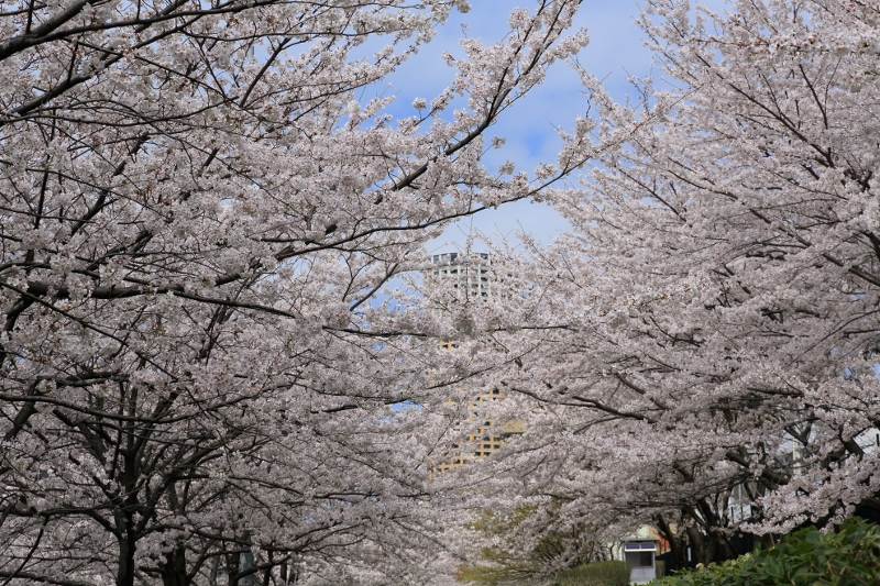 megurogawa_0023f.jpg
