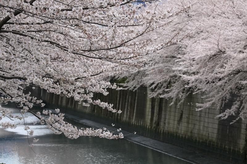 megurogawa_0025f.jpg