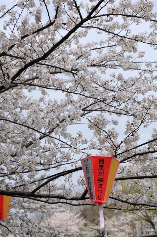 megurogawa_0027f.jpg