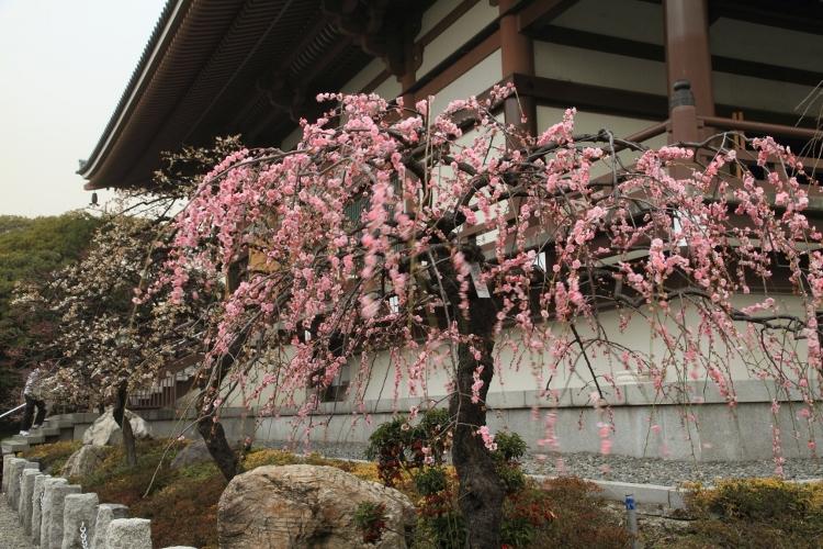 nishiarai_0016f.jpg