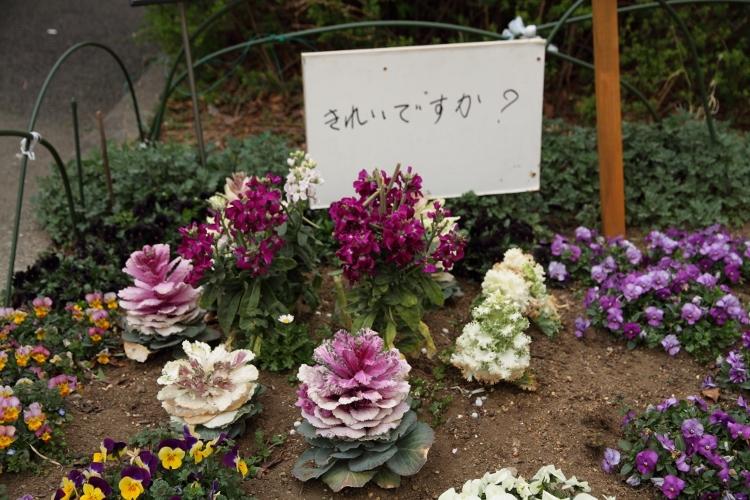 nishiarai_0017f.jpg