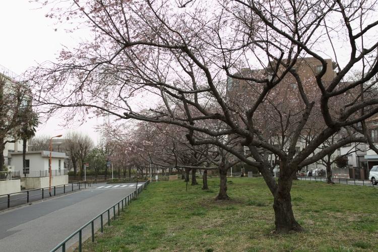 nishiarai_0022f.jpg