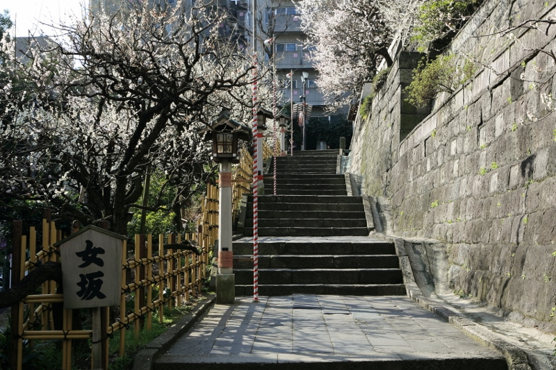 yushima-t_0001f.jpg