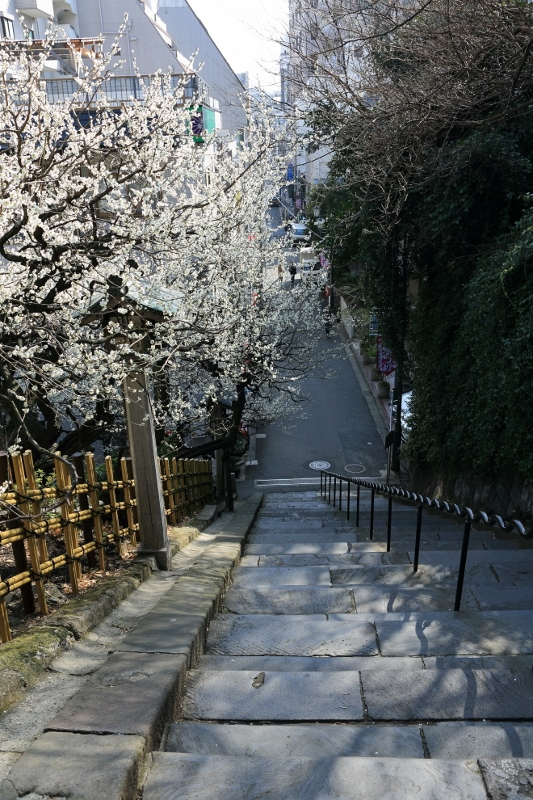 yushima-t_0003f.jpg