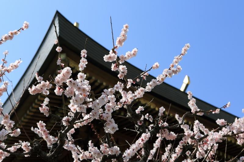 yushima-t_0017f.jpg