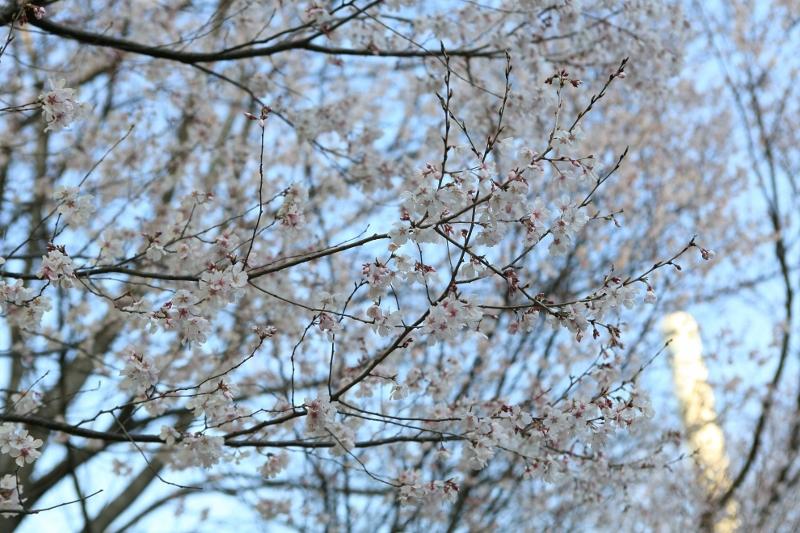yutenji2_0041f.jpg