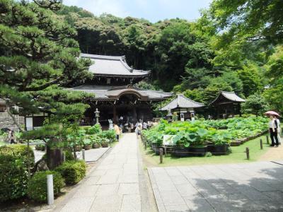 20120622三室戸寺1