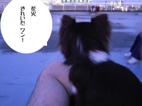 DSCN0023  花火2