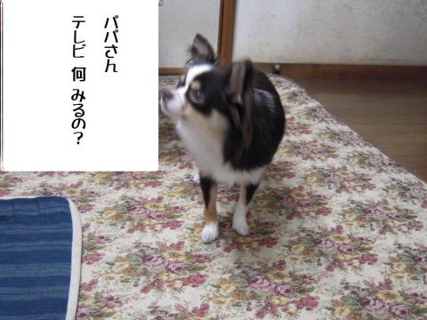DSCN9942 テレビ