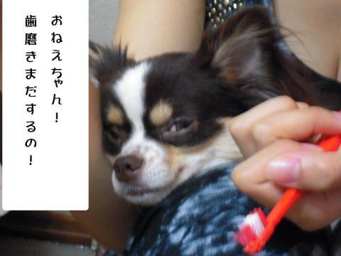 DSCN0050 お姉ちゃん