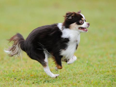 hiko-028_convert_20121016193448飛行犬ー5