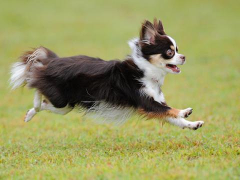 hiko-027_convert_20121016193215飛行犬ー4