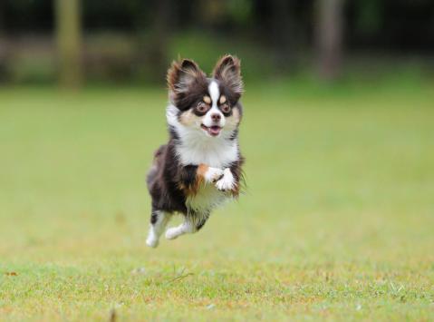 hiko-011_convert_20121016192045飛行犬