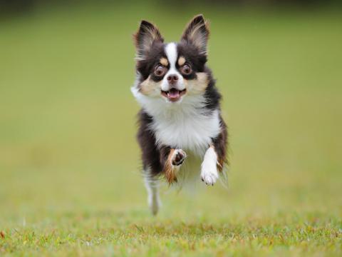 hiko-019_convert_20121016192612飛行犬ー1