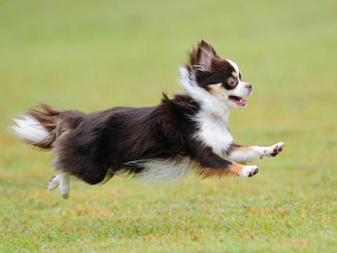 hiko-026_convert_20121016192943飛行犬ー3