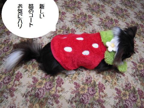 DSCN9936 苺