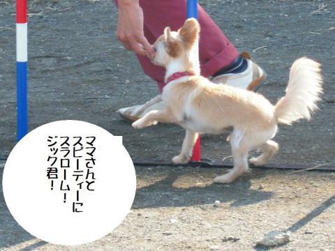 平塚DSCN0282