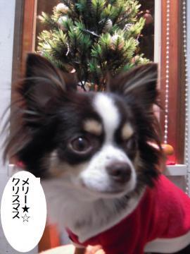 DSCN9953   クリスマス1