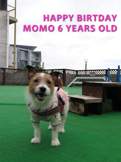 momo happy birthday 6 years old.