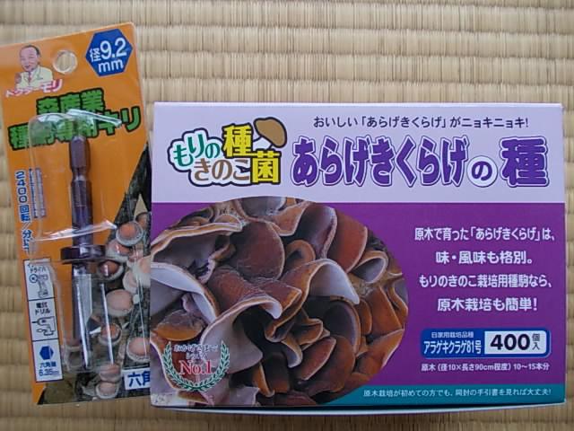 Aragekikurage mushroom 20130327