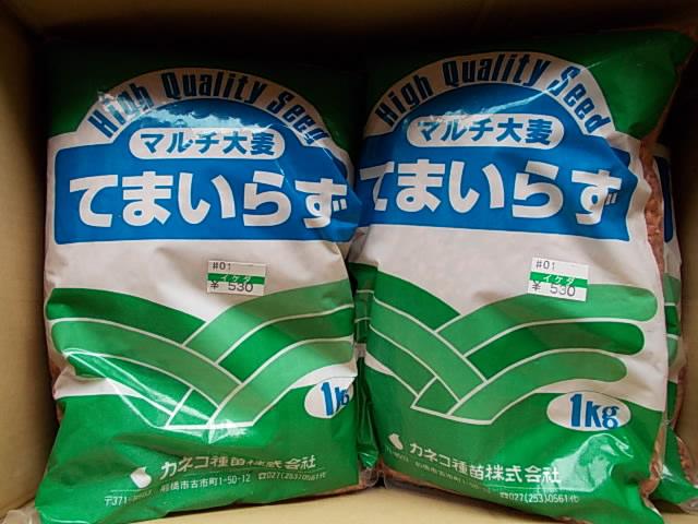 Barley Temairazu 20130219