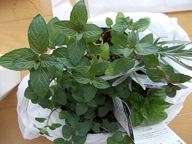 Herbs 20130509