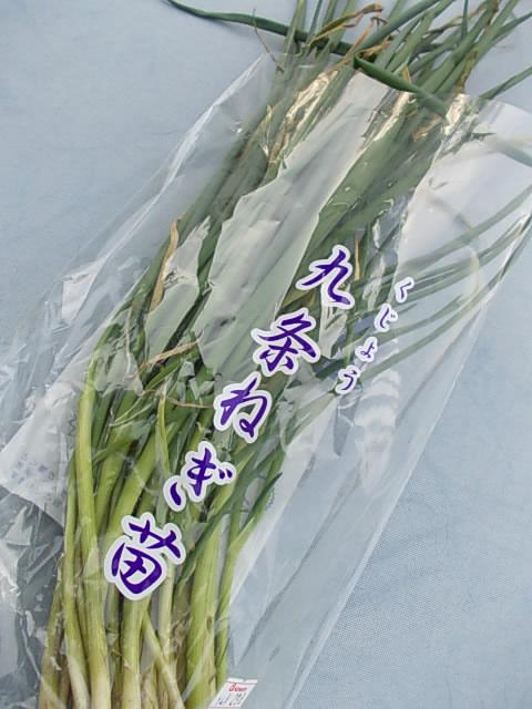Spring onion Kujou 20130409