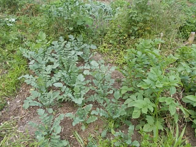 Vegetables 20130522