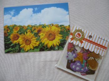 ヒマワリのポストカード&フェイバリットシール(Confection)1