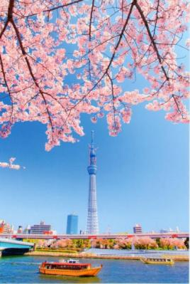 【postcrossing/forum(5)】I want....(request tag)送
