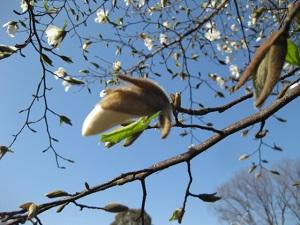 強風がふいた後 だるくなる 春の風邪 原因 鍼灸治療 鍼灸(はりきゅう)治療院