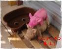 001_20120831083105.jpg