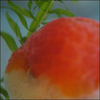 mosumosutabe01.jpg