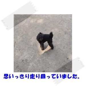 DSCF0334.jpg